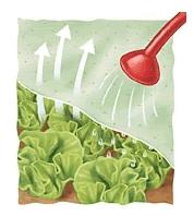 Ferramentaonline shop tessuto non tessuto agrivelo in busta - Telo tessuto non tessuto giardino ...